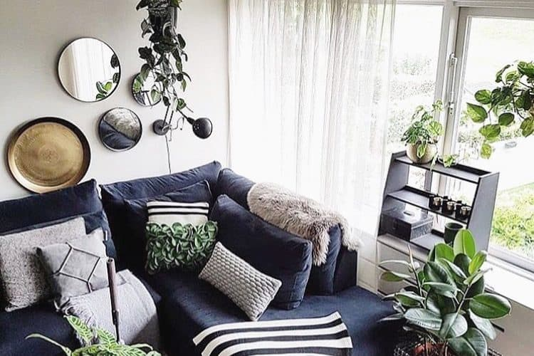 Beautify your home with air purifying plants