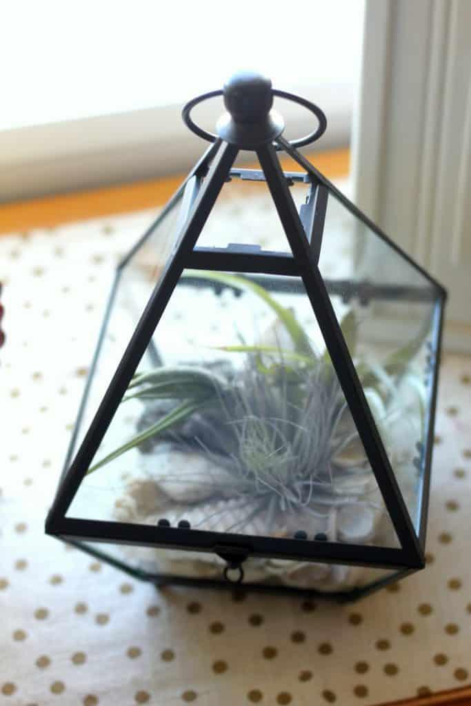 air plant terrarium idea